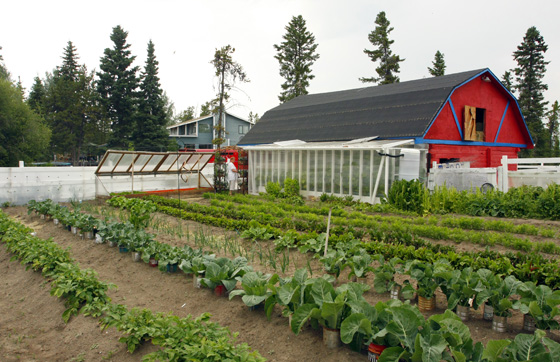 Whitehorse Stehelin Vegetable Garden in Yukon