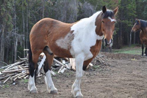 Whitehorse Horse Bed in Yukon