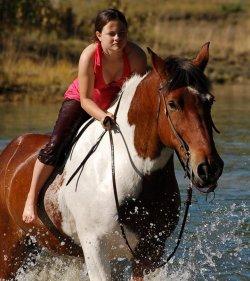 Horse Bed Whitehorse Yukon