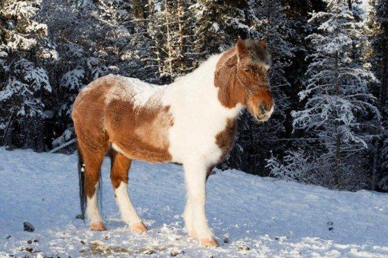 Little Big Man in the Snow Whitehorse, Yukon