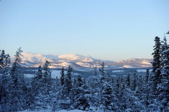Winter Landscape Whitehorse, Yukon