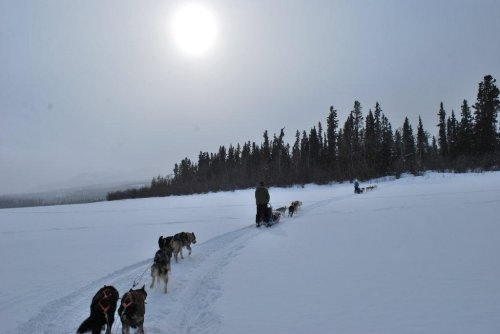 Dog Sled Team at Sunset Yukon Quest