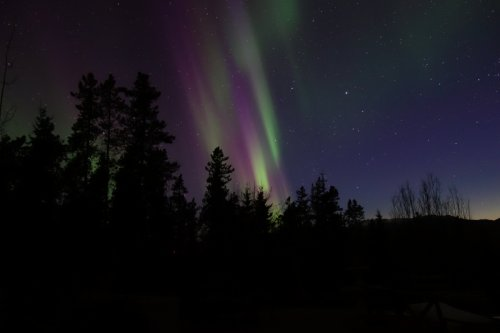 Whitehorse, Yukon, Northern Lights, green and purple