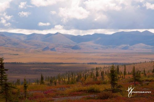 Dempster Highway Fall Colours