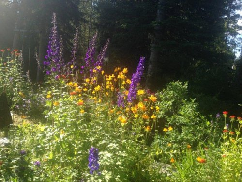 Bountiful Blooms at Hidden Valley B&B