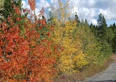Fall Colours. Whitehorse, Yukon.