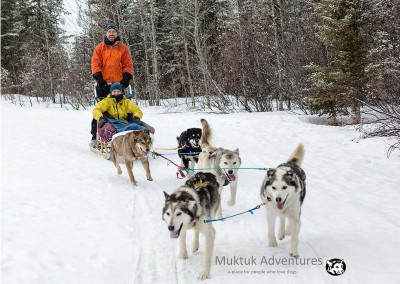 Dog Sledding with Muktuk Adventures, Whitehorse