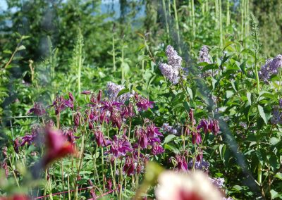 Hidden Valley Bed & Breakfast, Summer Garden, Whitehorse, Yukon