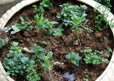 Spring babies growing in Hidden Valley Bed and Breakfast Greenhouse, Yukon