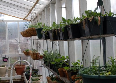 Rows of flowers ready for planting at Hidden Valley Bed and Breakfast greenhouse, Yukon