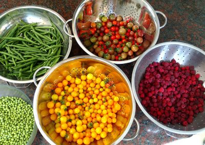 Day's harvest of peas, rasperries, green beans, tomatoes, from the garden at Hidden Valley Bed and Breakfast, Whitehorse Accommodation. Yukon.