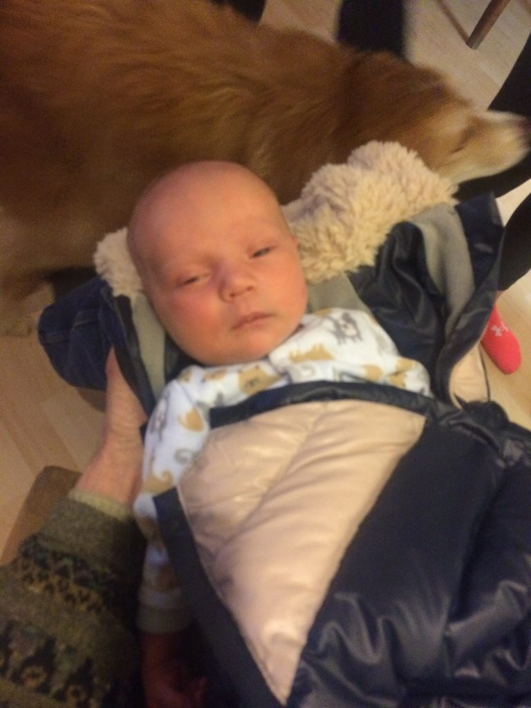 New arrival - grandson born on Christmas Eve